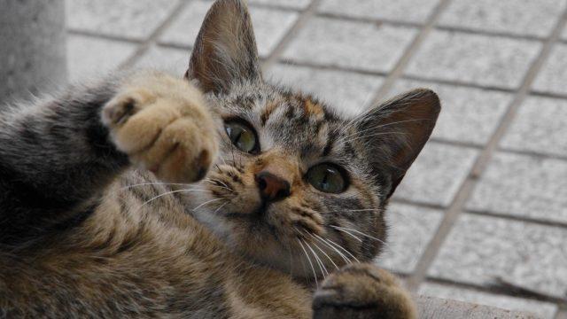 明けましておめでとうポーズのネコ